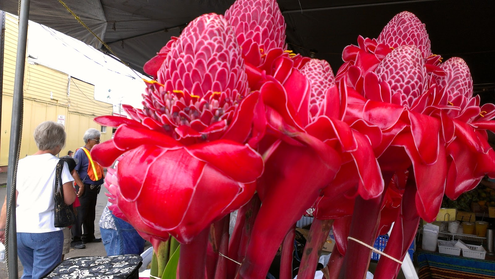 All hawaii news hawaii flower sales at 14 year low ballot problems hawaii ginger flowers at farmers market c 2012 all hawaii news izmirmasajfo Gallery