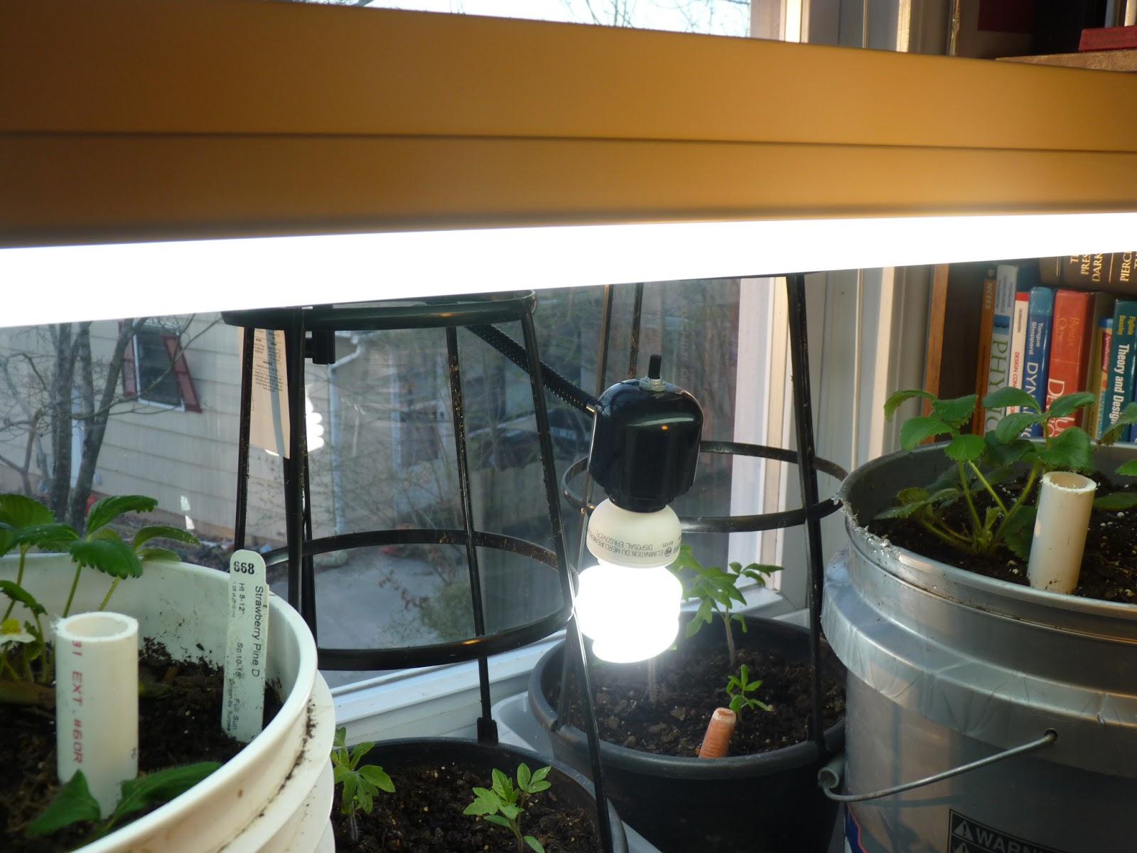 Edible and elegant urban gardening indoor greenhouse indoor greenhouse workwithnaturefo