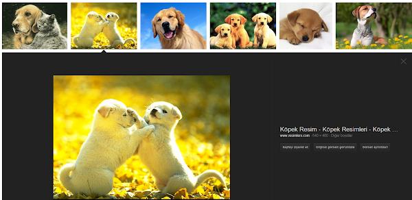 Google Görsel Arama Güncellemesi
