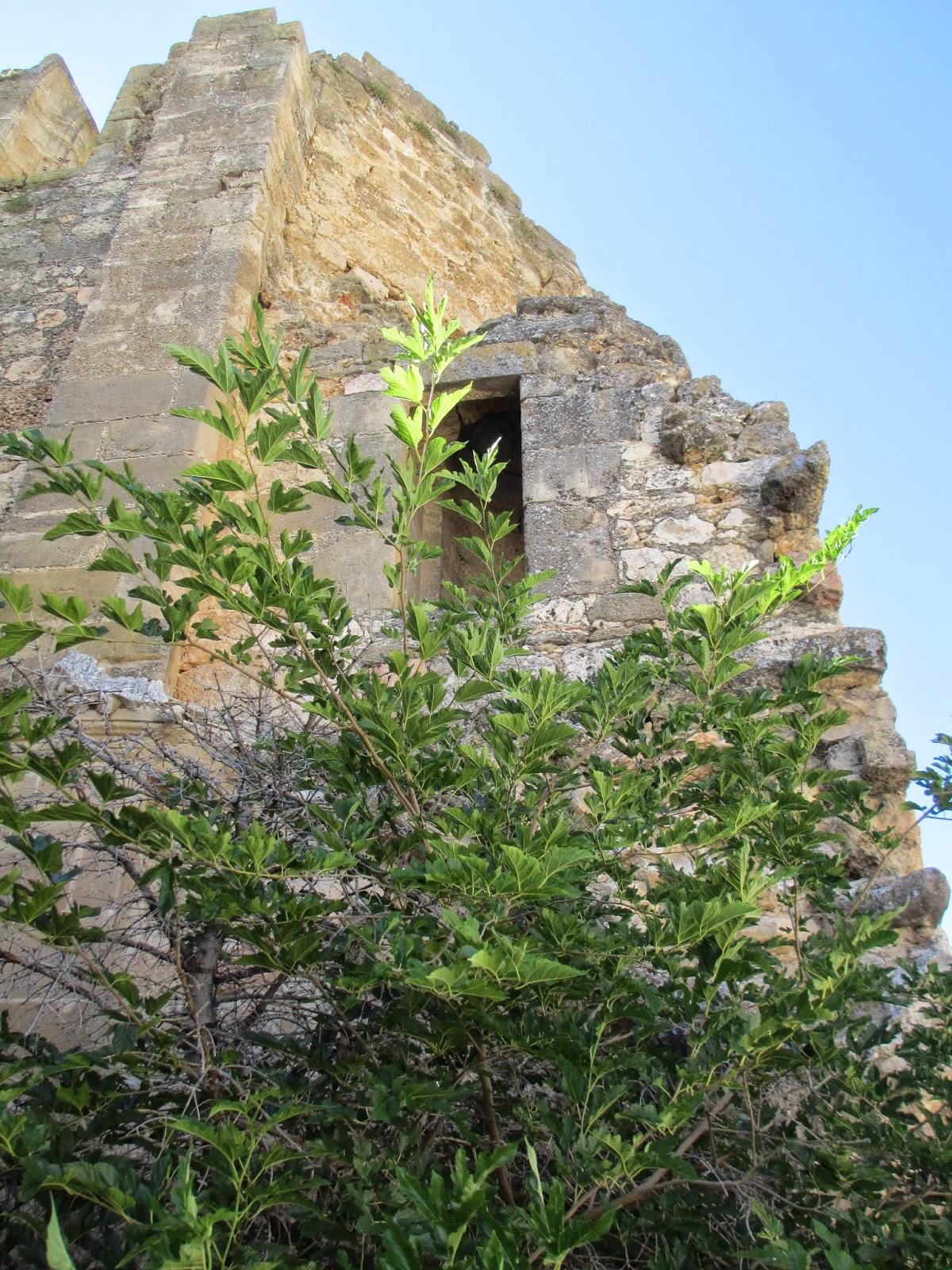 Iglesia muro