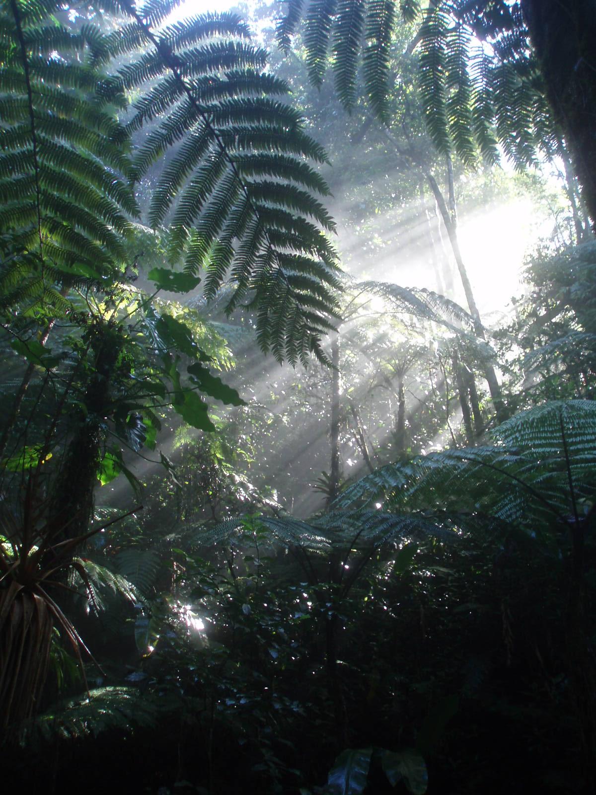 Forêt humide au soleil levant