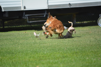 lure coursing outtakes