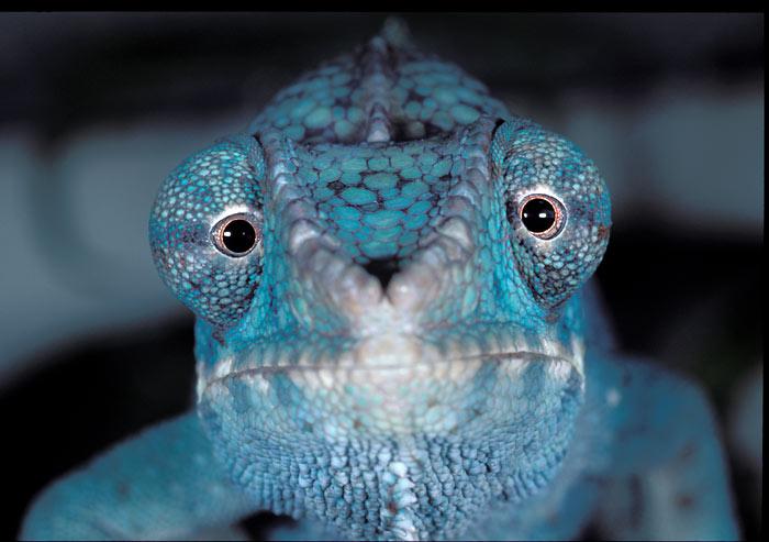 Blue Lizard Face Paint
