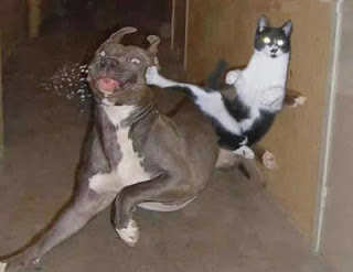 funny picture cat beats dog