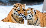 IMÁGENES DE ANIMALES CURIOSOS animales que caben en una mano analistas de ocio graciosos