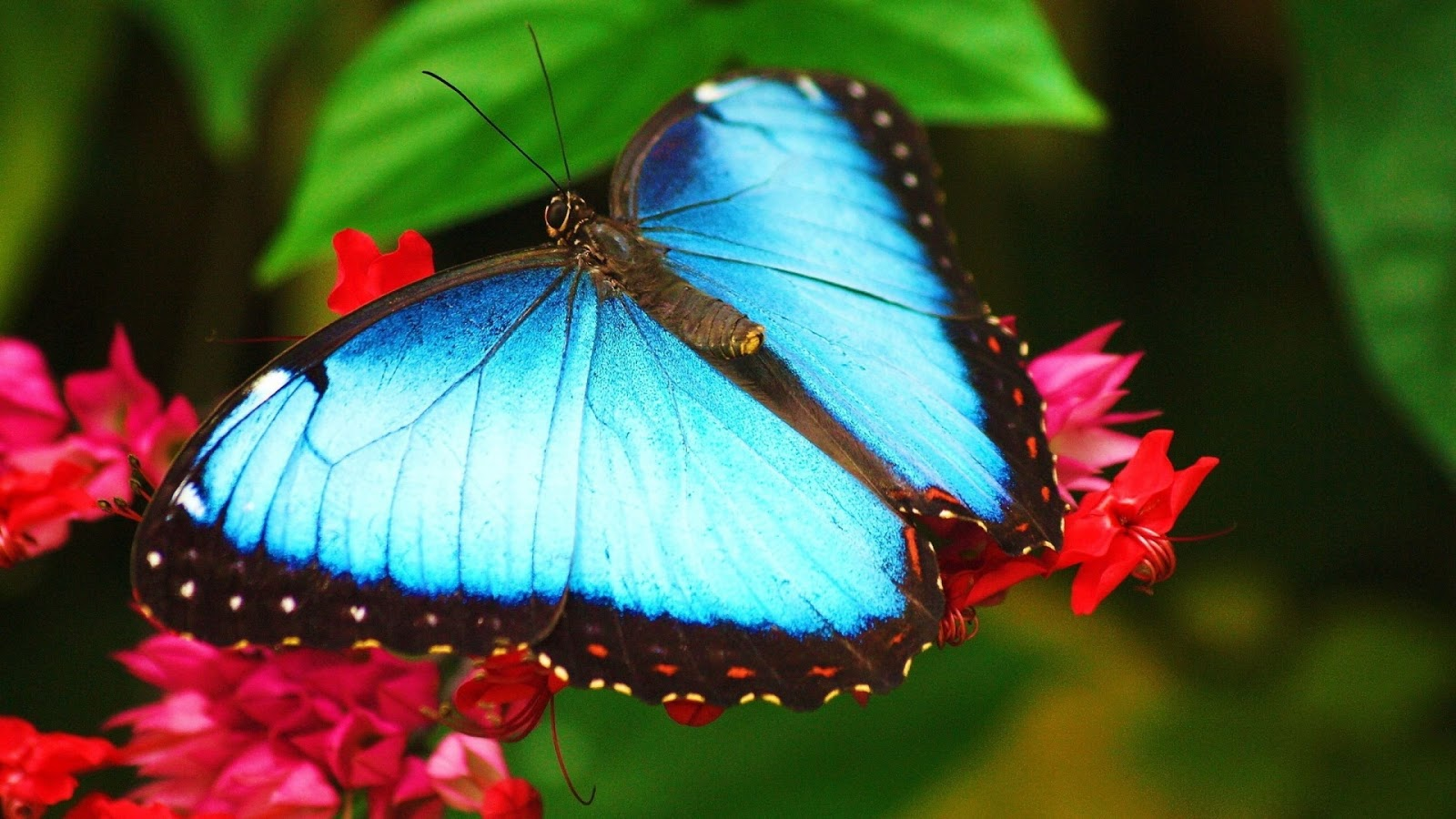 butterfly hq wallpaper 1024x768 - photo #42