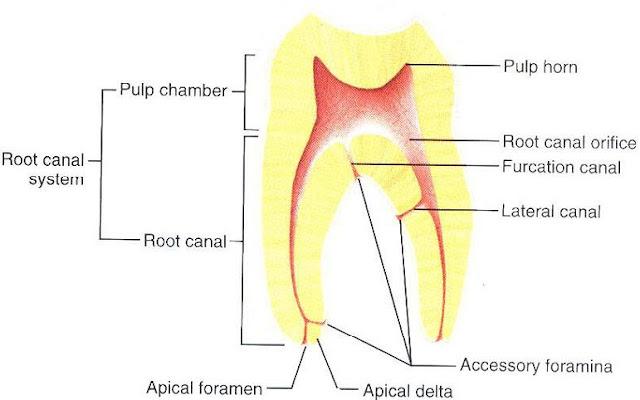 kaplan anatomy lecture notes pdf download