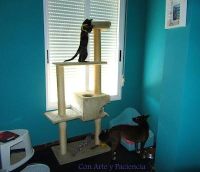 Un espacio para nuestros animales Con Arte y Paciencia