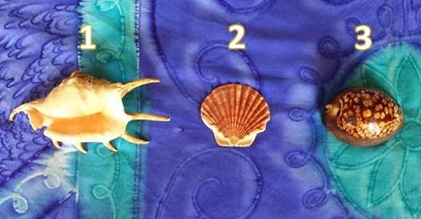 Pick A Shell And See What It Reveals About You!