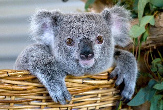 ideaz a few dangerous animals of australia danger down under