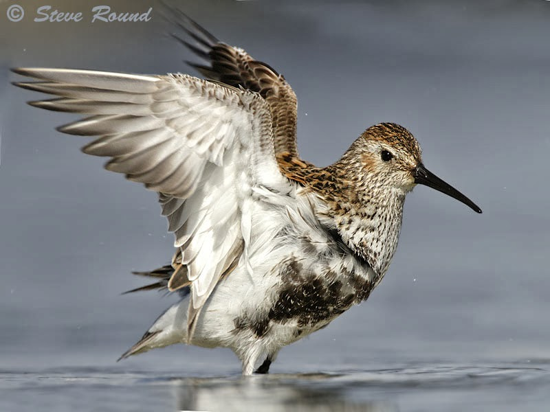 nature, wildlife, bird, wader