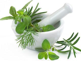 cara mengatasi kondiloma secara herbal