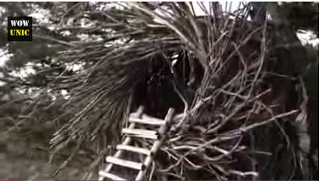 Rumah Yang Mirip Sarang Burung Raksasa dari daniel maulana