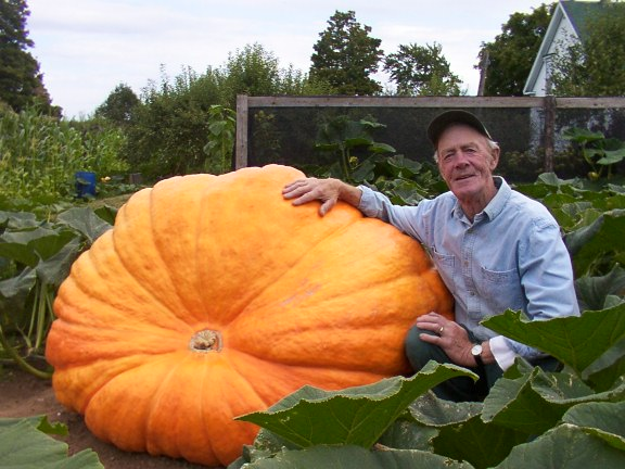 Deck The Holiday S Growing Giant Pumpkins