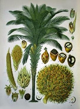 Bagian-bagian kelapa sawit
