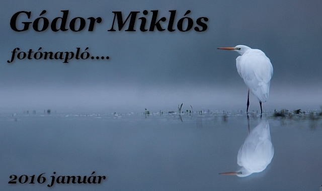 Gódor Miklós , fotónapló...