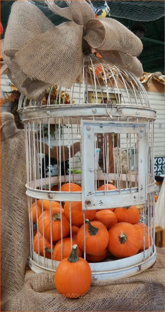 captured pumpkins - caged pumpkins photo