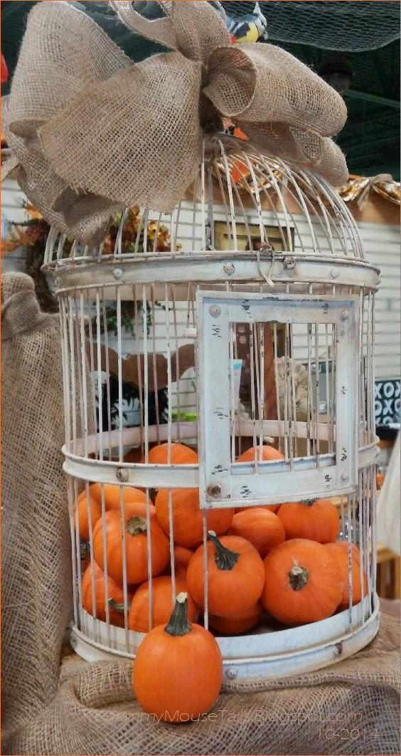 captured pumpkins - caged pumpkins photo