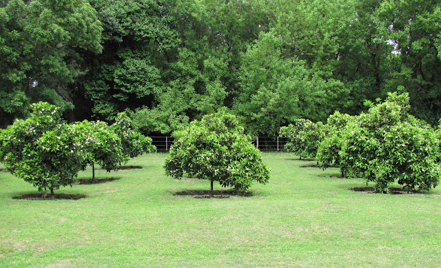 En el jardin invierno cosecha de c tricos for Arboles frutales para jardin