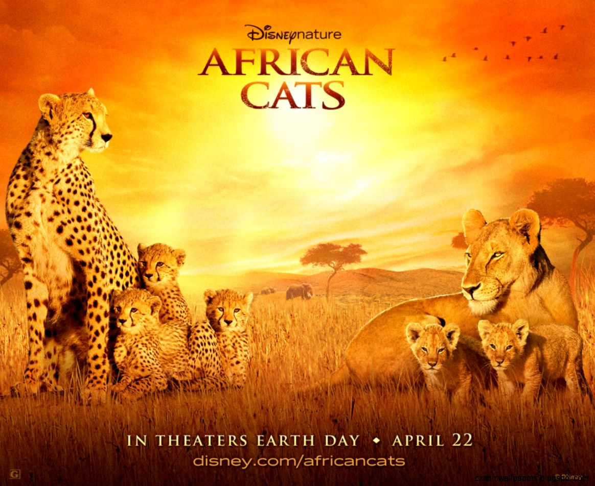 African Cats   Free Download Wallpaper Games   Daily Free Games