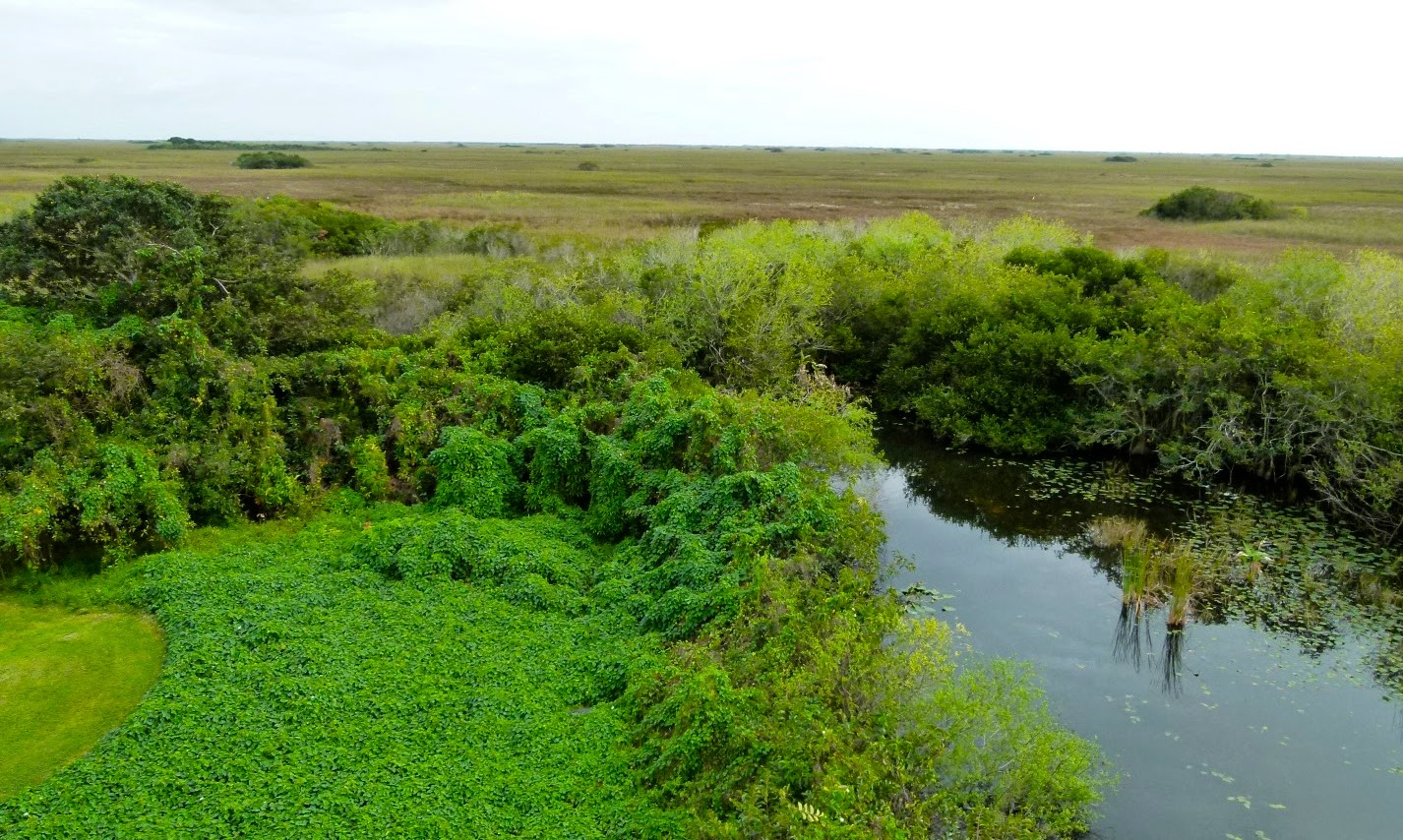 Scenery in Shark Valley, Everglades National Park