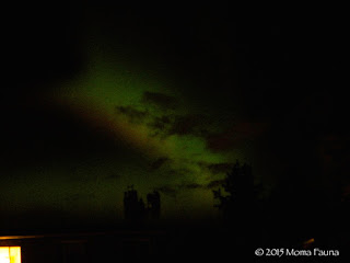 Aurora borealis,  dancing over the cell tower on a neighboring apartment building.
