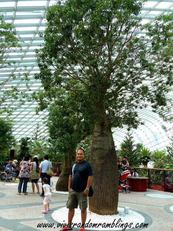 The Flower Dome, Gardens by the bay