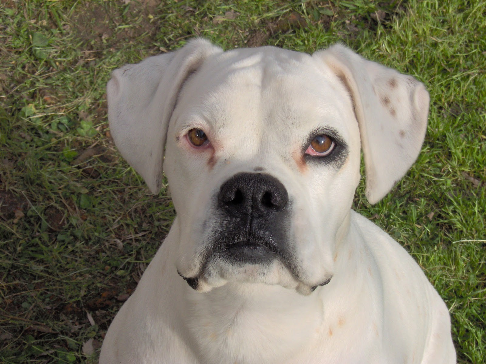 puppies As Melhores Raças de Cães para Família