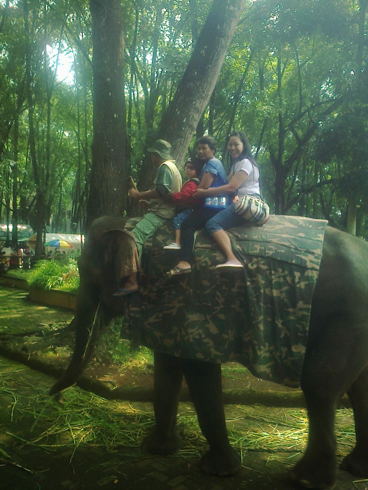 di kebun binatang ragunan