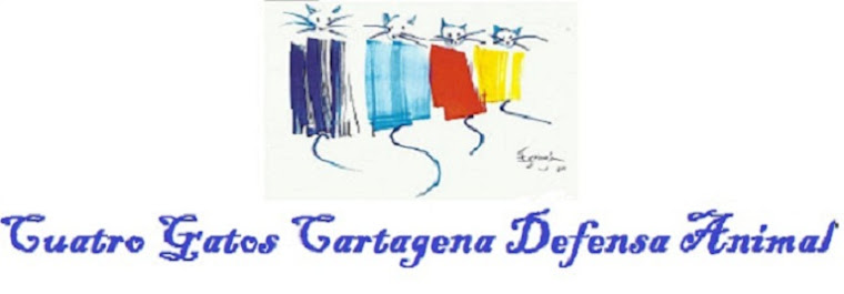 Cuatro Gatos Cartagena