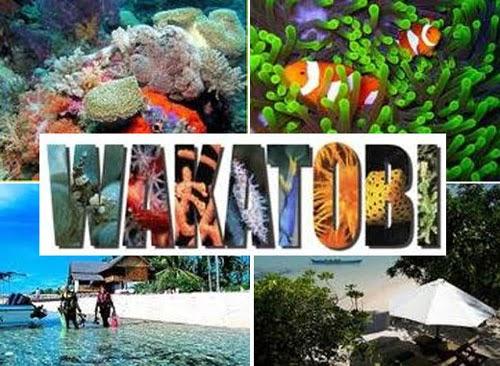 wisata taman nasional wakatobi