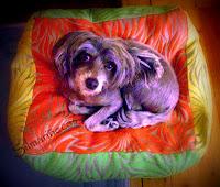cojin_para_perro-