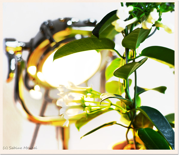 Psynopsis Interior Design Lamp and Plant