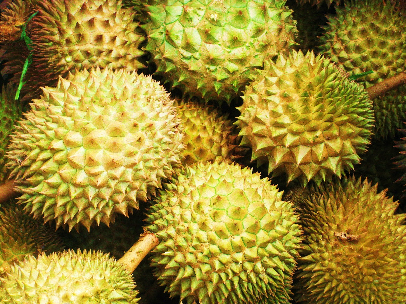 How to pick and eat durian fruit the washington post - Durian Tasting