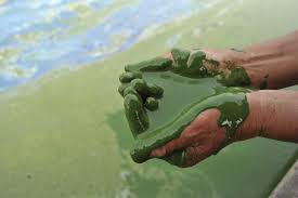 Pertumbuhan alga