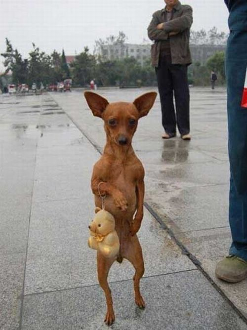 Dogs Walking on 2 Legs - Amazing ~ PModels