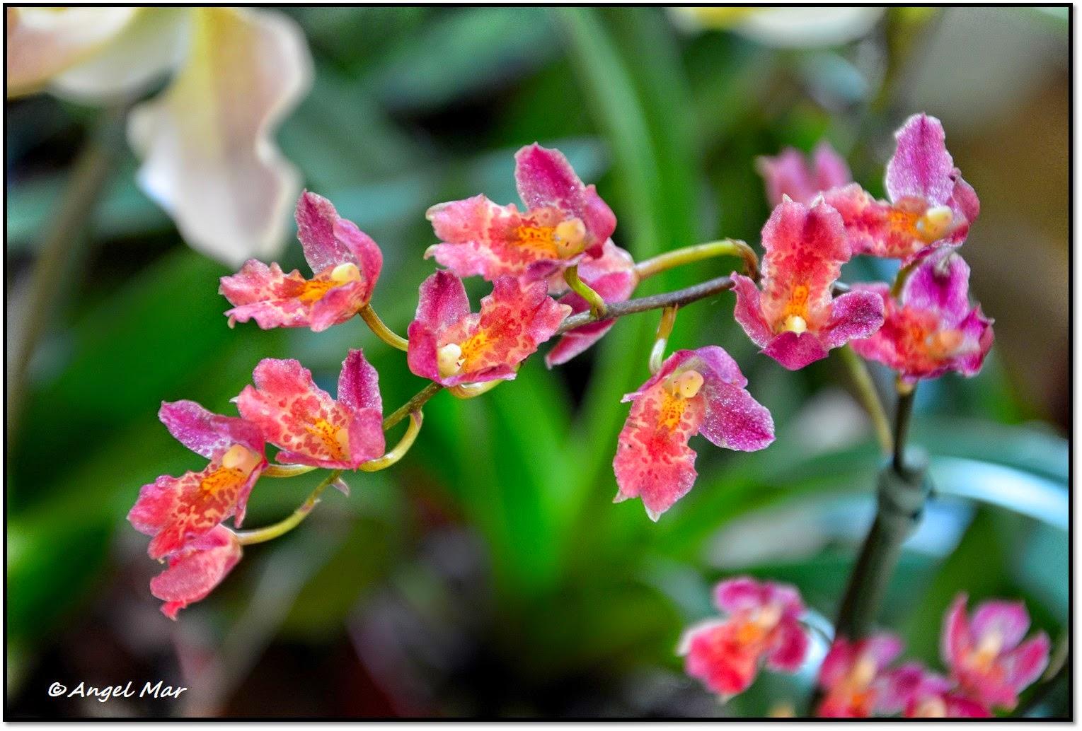 Orquídea de flores Descargar Fotos gratis Freepik - Ver Imagenes De Flores De Orquideas