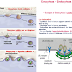 [Tuto-S1] - Endocytose et Exocytose