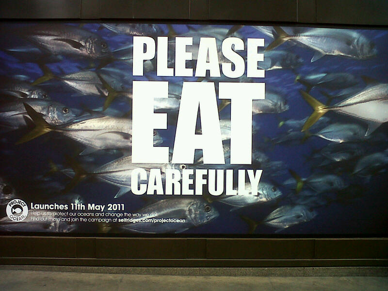 my stuff & no sense: No more fish in the sea?