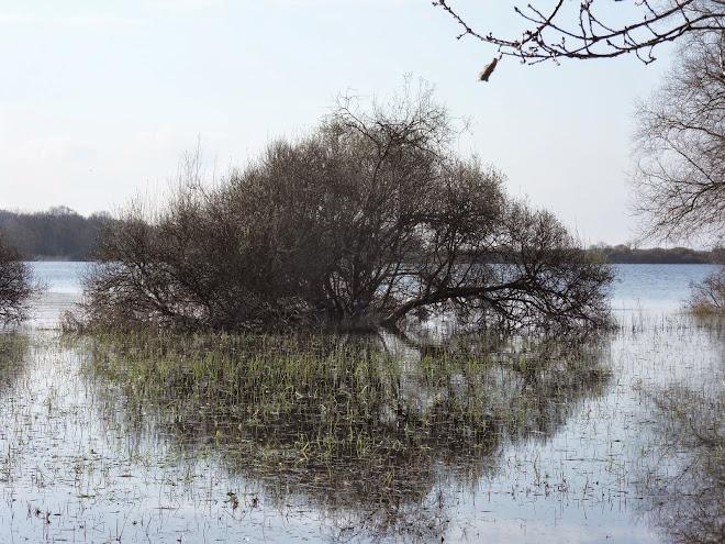 arbre de l'île (ronde)