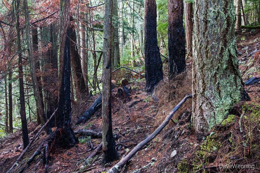 Ginnett Hill Trail, Deception Pass State Park