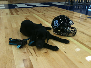 Coach is lying down next to a Berkeley football helmet.