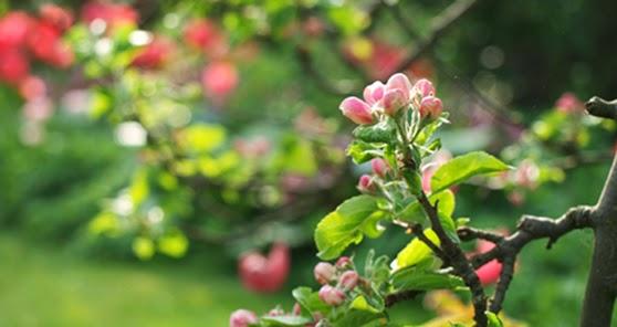 Haveplaner og plantebegejstring: fra skvalderkÅl til blomsterbed