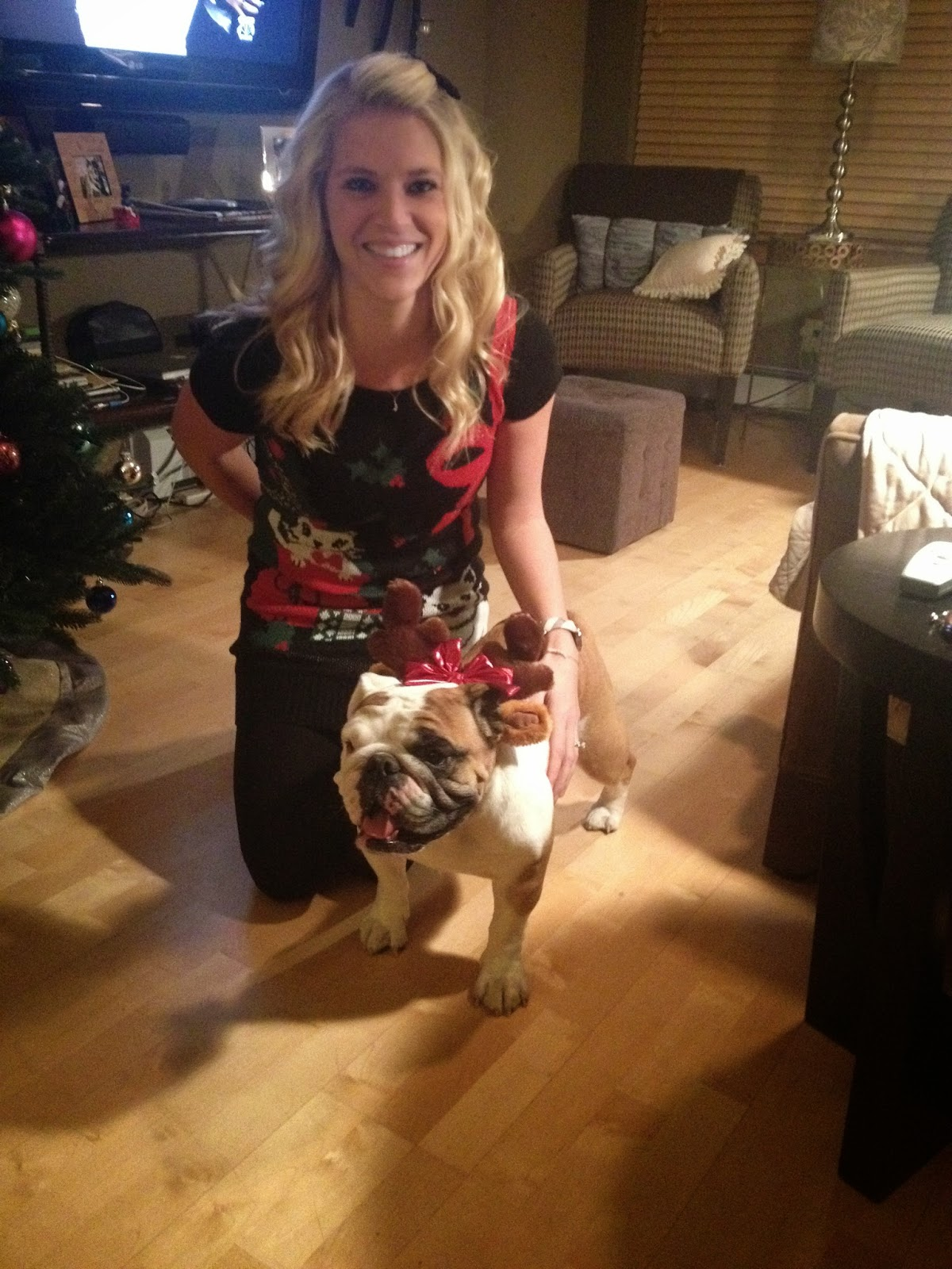 English bulldog for Christmas