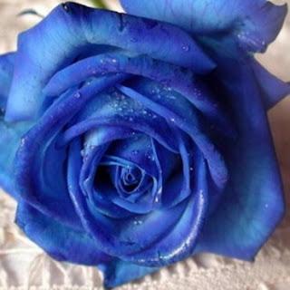Mots bleus... Mod_article3312587_1