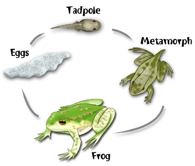 Science Year 2: Life Cycle of Animals