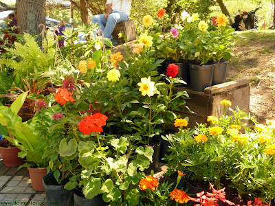 Arte y jardiner a el jard n en macetas for Que plantas poner en una jardinera