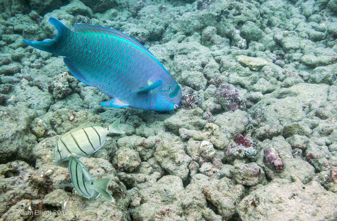 Waikiki Honolulu Atom S Picture Blog