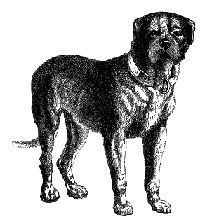 Digital Dog Download Vintage Mastiff Clip Art