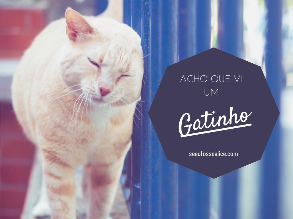 Você e o seu gato no blog